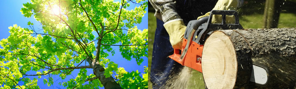 Tree Services Landisville